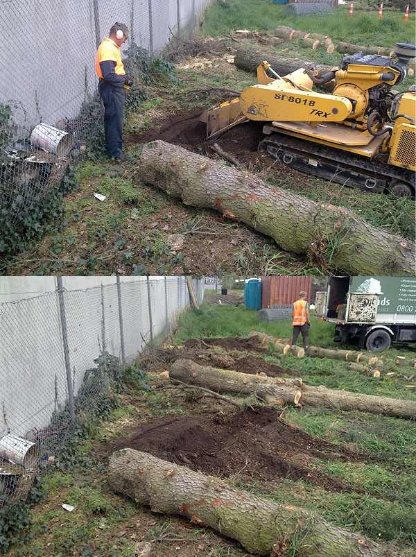 Stump Grinding- During & After